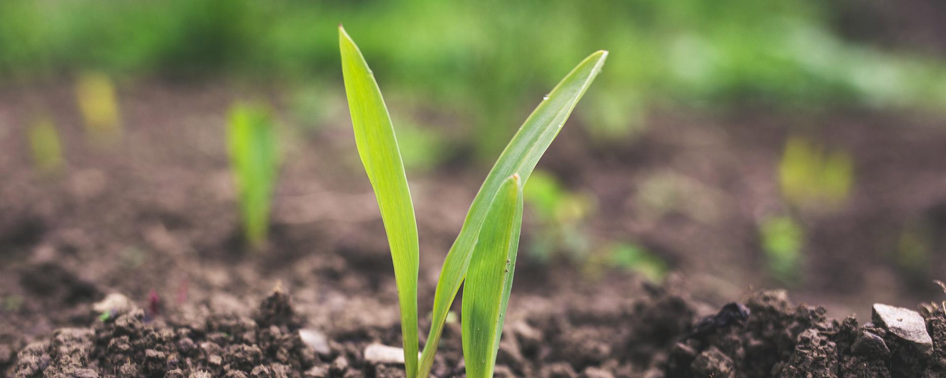 biochar-como-mejora-del-suelo-foto