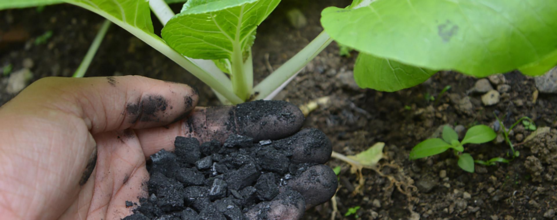 biochar-suelo-cabecera